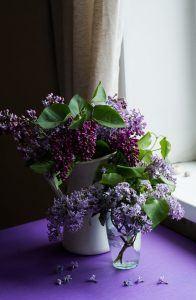 Violet Accessories: Lilacs