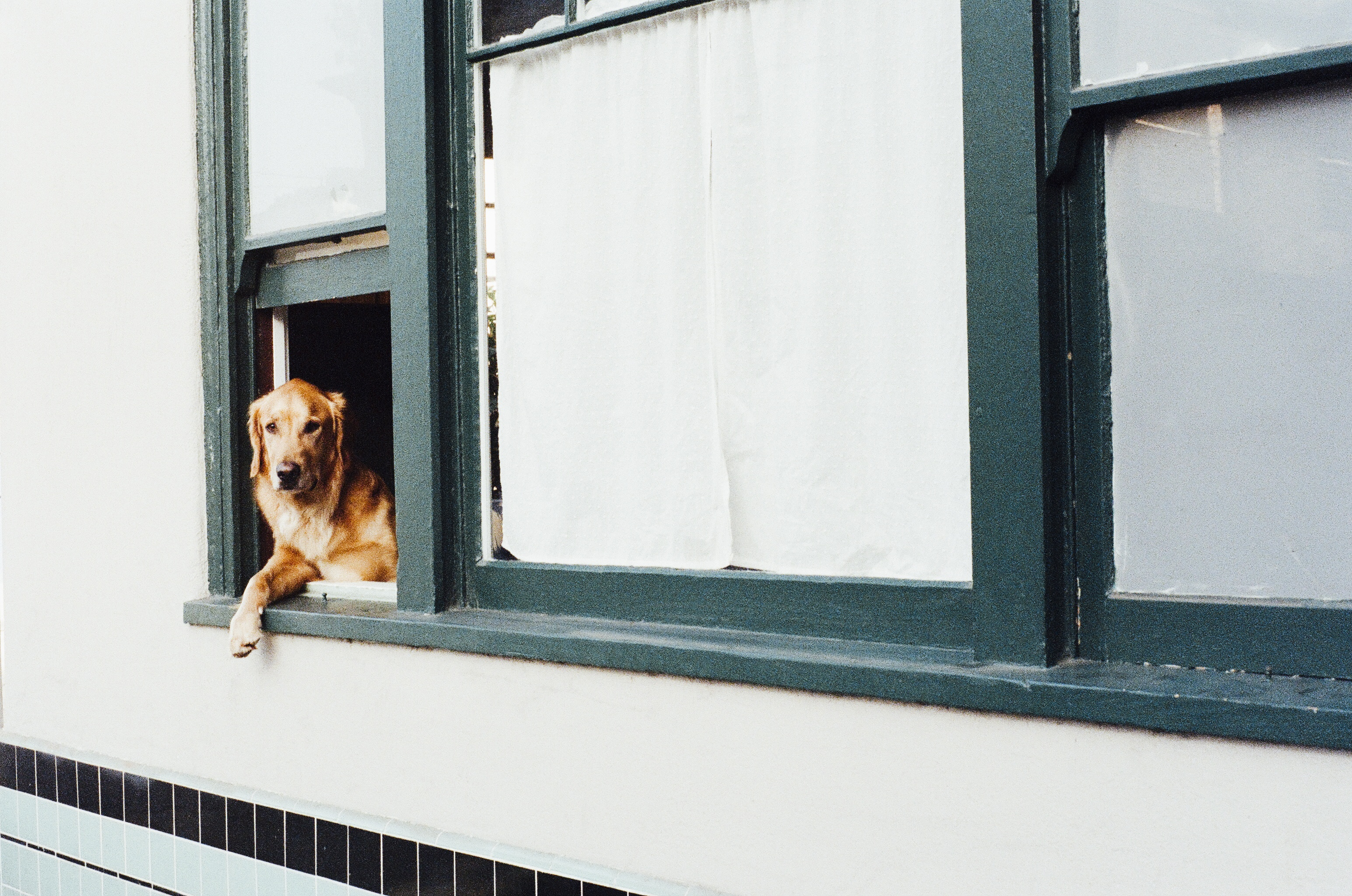 Pet-Friendly Tips for Your Home