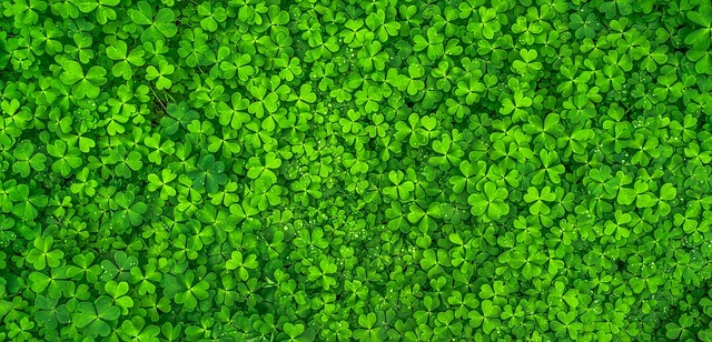 Fun, Creative, and Green: It's St. Patrick's Day!